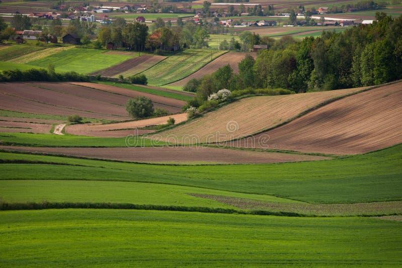 Πράσινα πεδία άνοιξη στοκ εικόνες