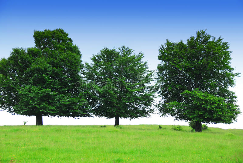 πράσινα τρία δέντρα πεδίων στοκ εικόνες