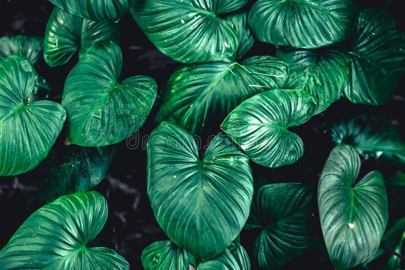 Πράσινα τροπικά φύλλα φυτών φύσης φύλλων στοκ φωτογραφίες