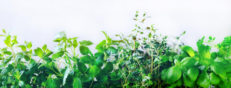 Πράσινα φρέσκα αρωματικά χορτάρια - melissa, μέντα, θυμάρι, βασιλικός, μαϊντανός στο άσπρο υπόβαθρο Πλαίσιο κολάζ εμβλημάτων από  στοκ φωτογραφία με δικαίωμα ελεύθερης χρήσης