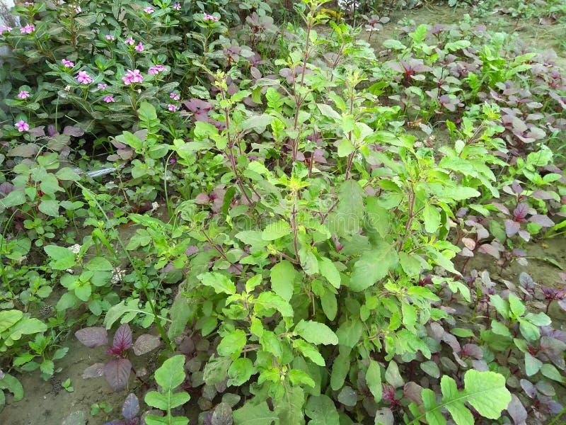 Πράσινα φυτά στον κήπο στοκ φωτογραφία