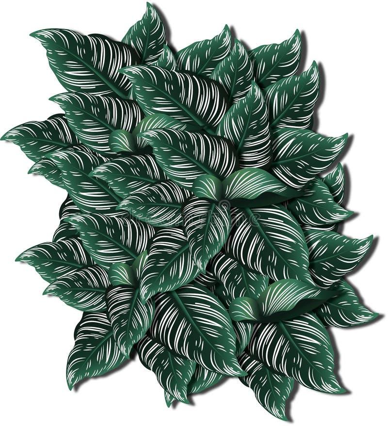 Πράσινα φυτά, φύλλα των φυτών του Adan για τον εραστή φυτών διανυσματική απεικόνιση