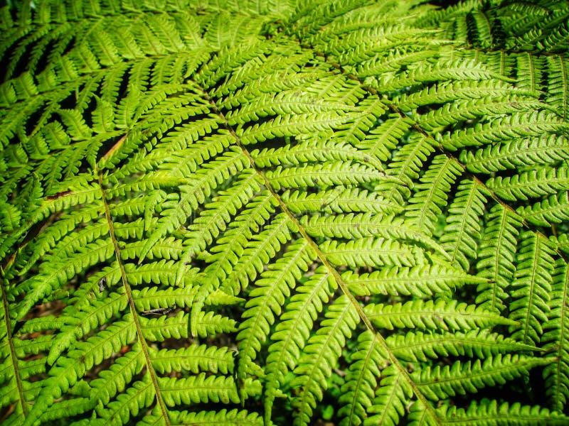 Πράσινα φύλλα δέντρων φτερών στοκ εικόνα με δικαίωμα ελεύθερης χρήσης