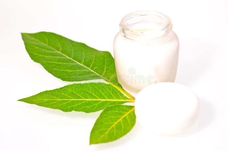 πράσινα φύλλα κρέμας ομορφ στοκ φωτογραφίες με δικαίωμα ελεύθερης χρήσης