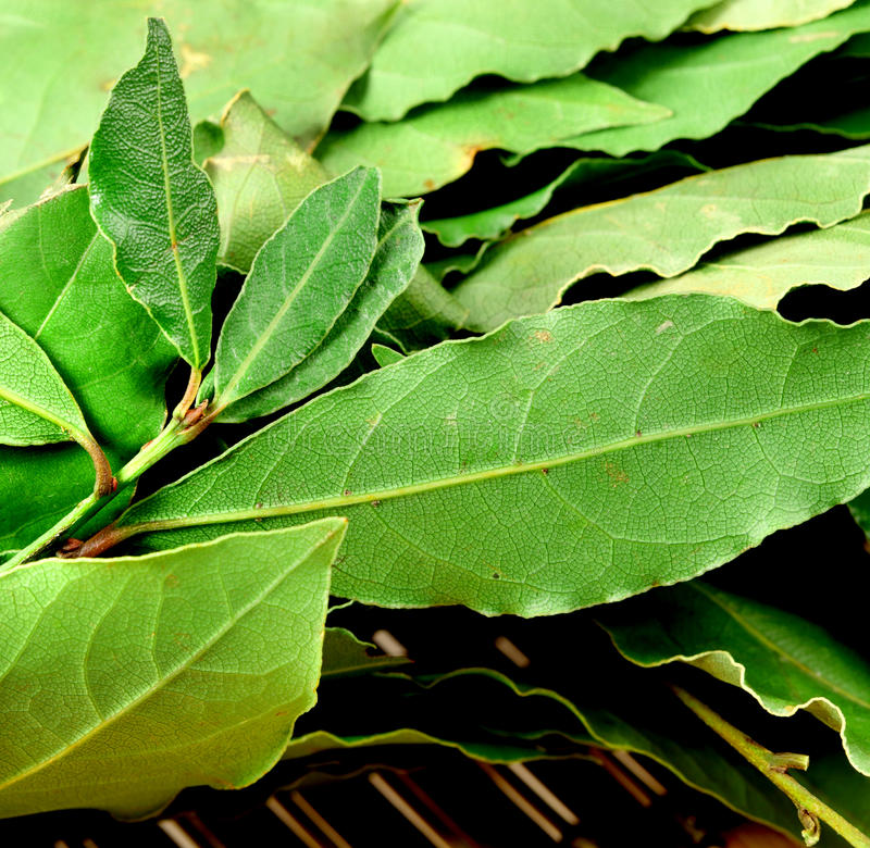 πράσινα φύλλα κόλπων στοκ φωτογραφία