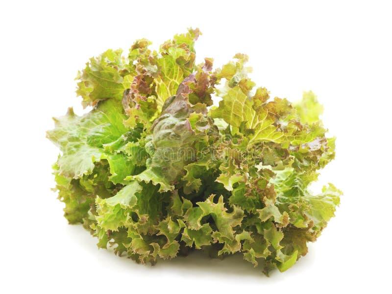 Πράσινα φύλλα μαρουλιού στοκ φωτογραφία με δικαίωμα ελεύθερης χρήσης
