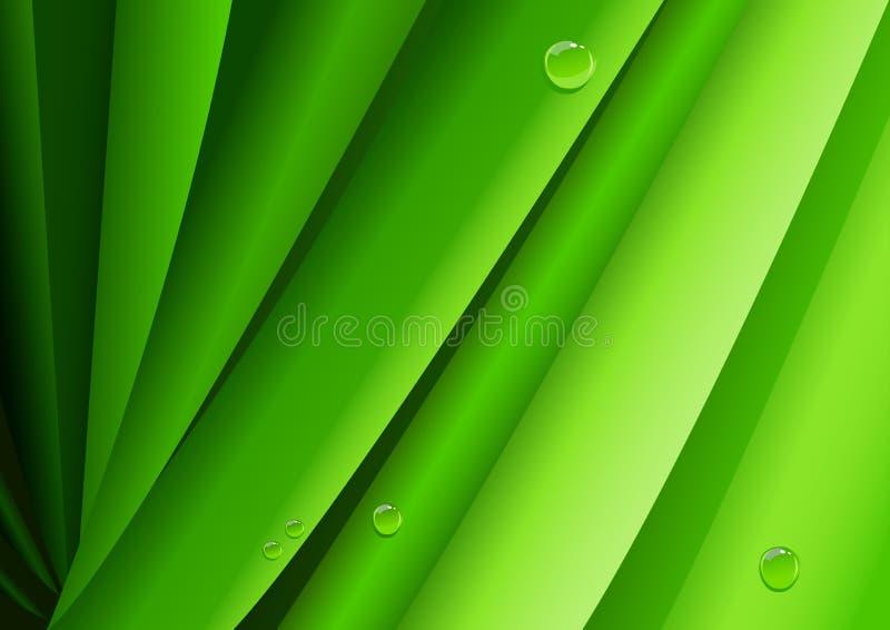 Πράσινα φύλλα με τη δροσιά πρωινού διανυσματική απεικόνιση