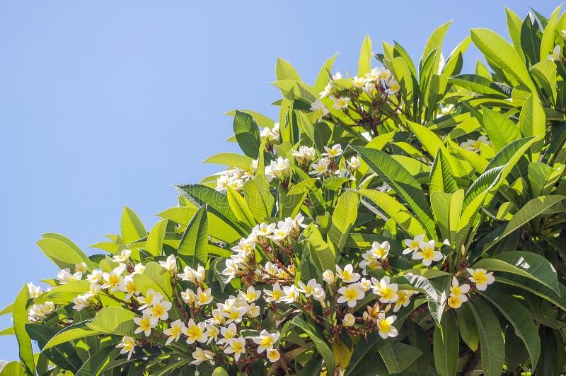 Πράσινα φύλλα μιας τροπικής κινηματογράφησης σε πρώτο πλάνο φυτών στοκ εικόνα
