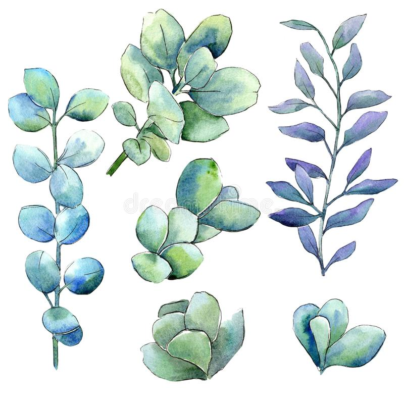 Πράσινα φύλλα πυξαριού Watercolor Floral φύλλωμα βοτανικών κήπων φυτών φύλλων Απομονωμένο στοιχείο απεικόνισης διανυσματική απεικόνιση