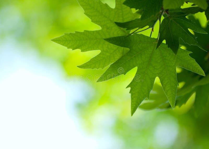 Πράσινα φύλλα, ρηχή εστίαση στοκ φωτογραφίες