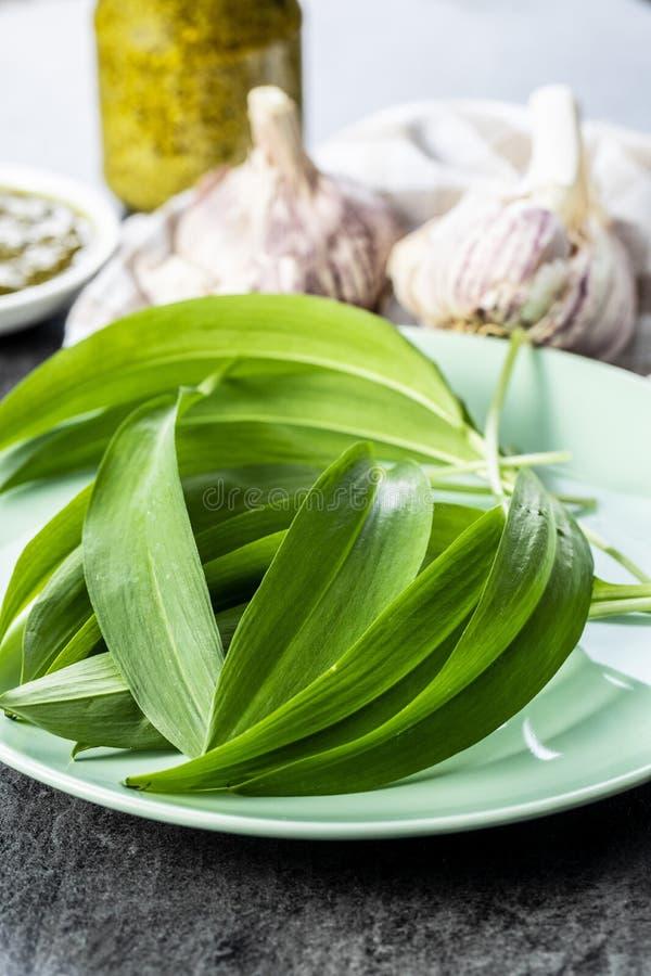 Πράσινα φύλλα σκόρδου και βολβός σκόρδου Φύλλα Ramsons στοκ φωτογραφία