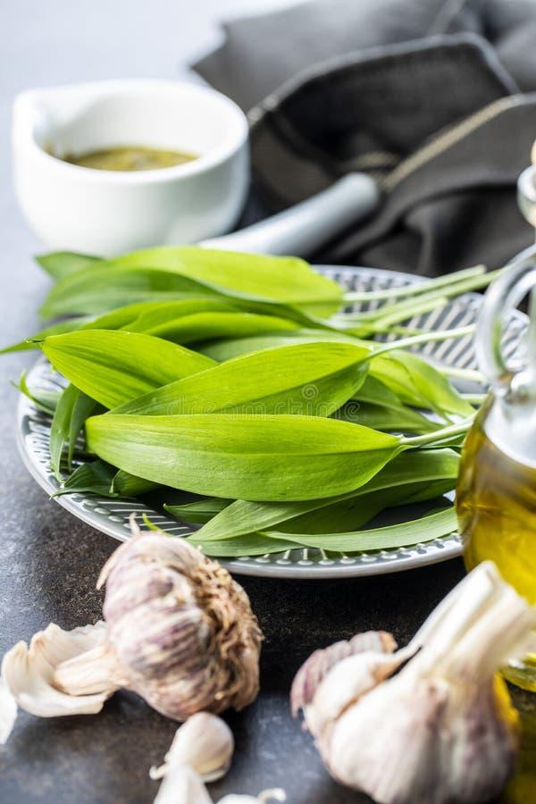 Πράσινα φύλλα σκόρδου και βολβός σκόρδου Φύλλα Ramsons στοκ φωτογραφία με δικαίωμα ελεύθερης χρήσης