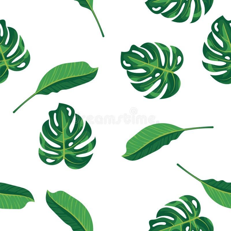 Πράσινα φύλλα σχεδίων του τροπικών φυτού, του φοίνικα και του δέντρου στο άσπρο υπόβαθρο Άνευ ραφής δέντρο monstera φυλλώματος σχ διανυσματική απεικόνιση