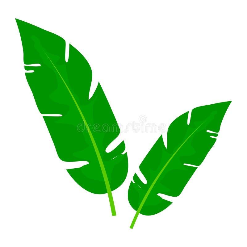 Πράσινα φύλλα του φοίνικα μπανανών που απομονώνεται στο άσπρο υπόβαθρο θέμα τροπικό Εικόνα του διακοσμητικού τροπικού φυλλώματος απεικόνιση αποθεμάτων