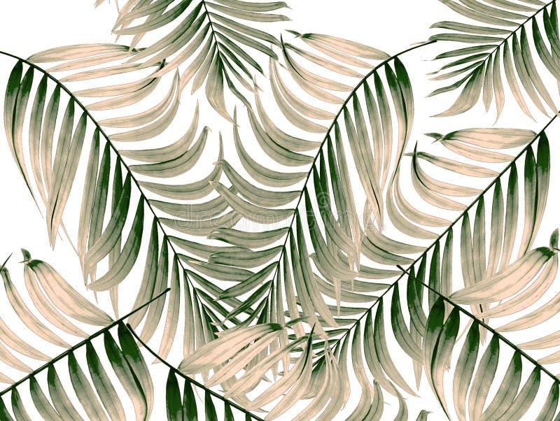 Πράσινα φύλλα του φοίνικα στο άσπρο υπόβαθρο ελεύθερη απεικόνιση δικαιώματος