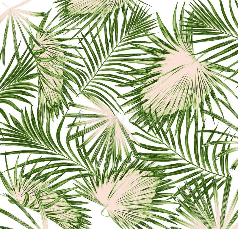 Πράσινα φύλλα του φοίνικα στο υπόβαθρο απεικόνιση αποθεμάτων