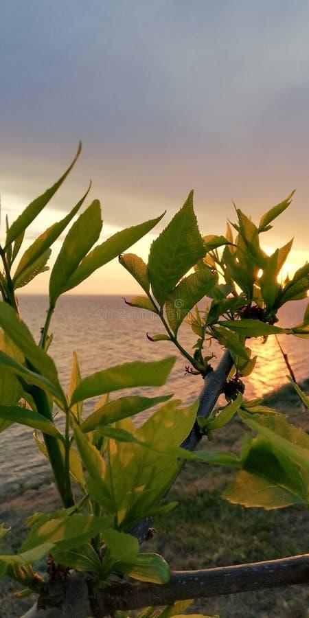 Πράσινα φύλλα του φυτού ενάντια στο τοπίο θάλασσας ηλιοβασιλέματος Ευγενές όμορφο υπόβαθρο στοκ φωτογραφία