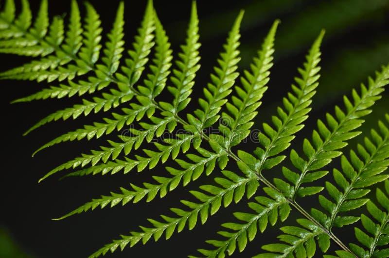 Πράσινα φύλλα φτερών στοκ φωτογραφία με δικαίωμα ελεύθερης χρήσης
