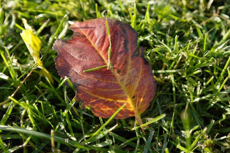 πράσινα φύλλα χλόης φθινοπώ& στοκ εικόνα με δικαίωμα ελεύθερης χρήσης