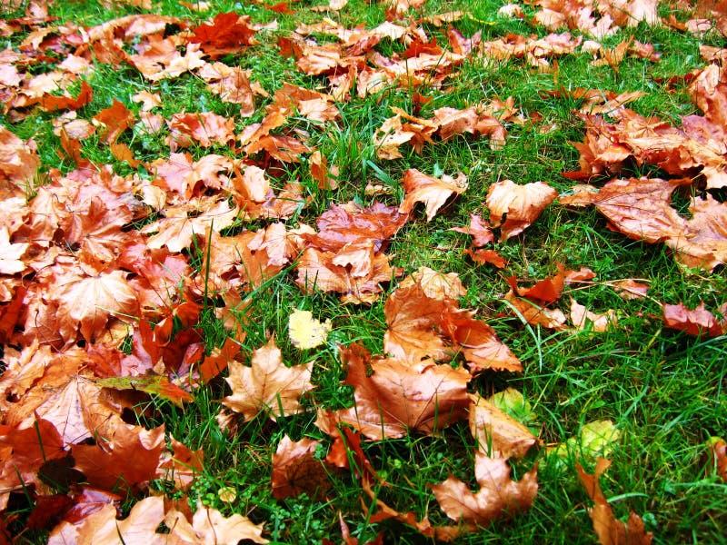 πράσινα φύλλα χλόης φθινοπώ& στοκ φωτογραφία με δικαίωμα ελεύθερης χρήσης