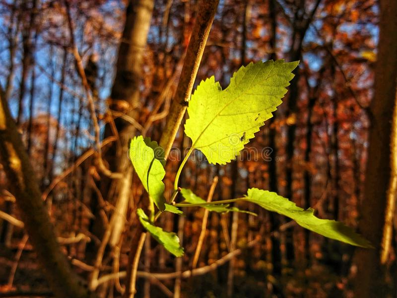πράσινα φύλλα στοκ εικόνα