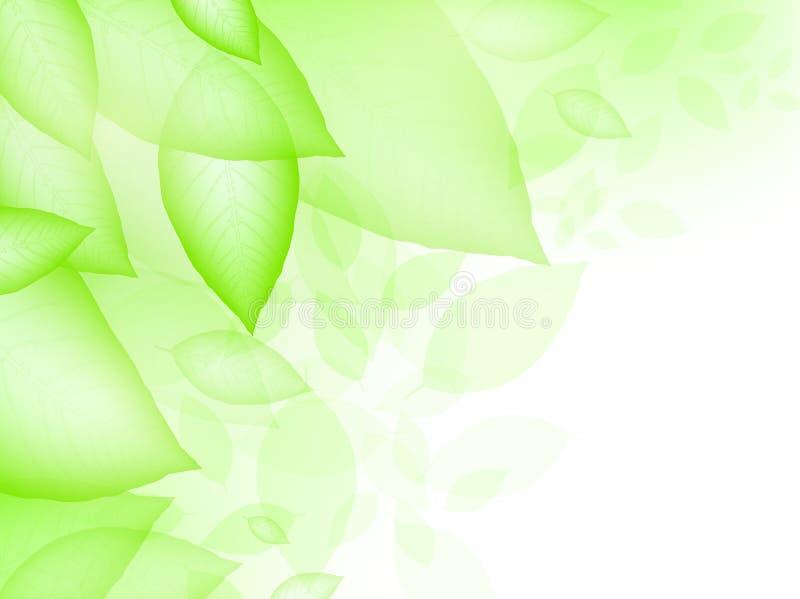 πράσινα φύλλα διανυσματική απεικόνιση