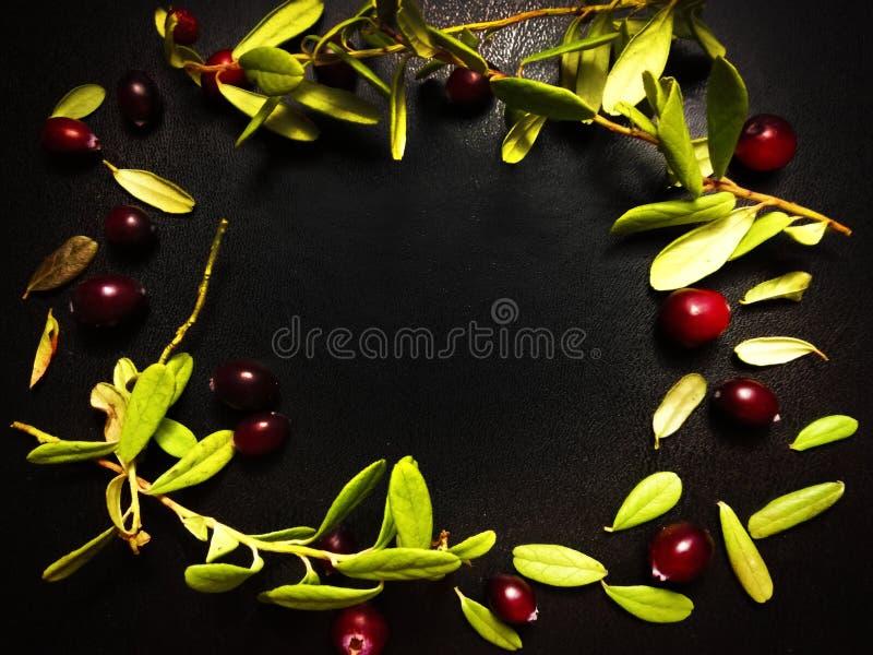 πράσινα φύλλα cowberry στοκ φωτογραφίες