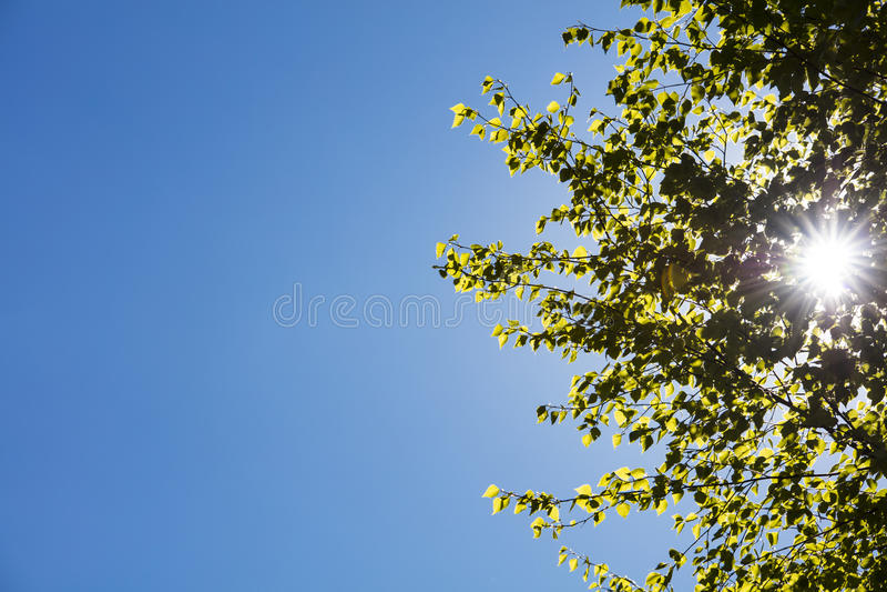Πράσινα φύλλα δέντρων στη Φινλανδία στοκ φωτογραφία