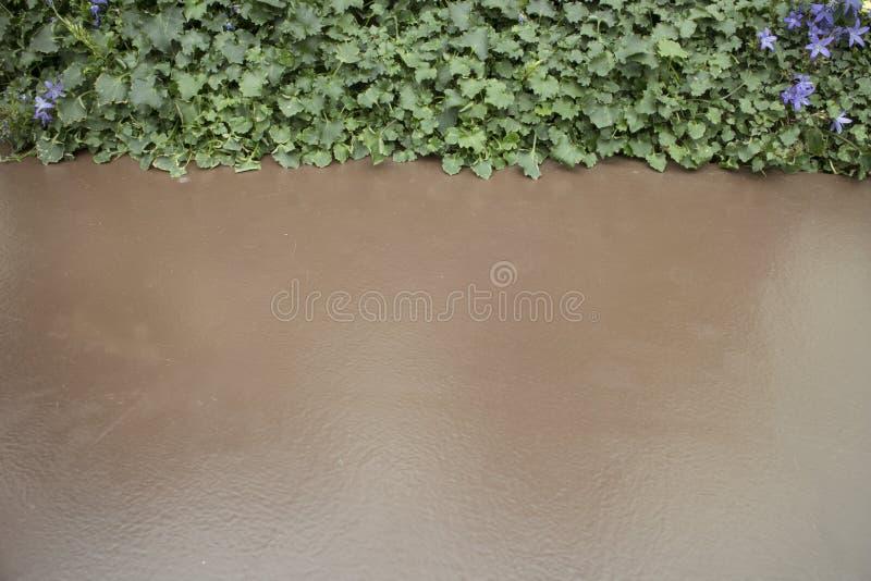 Πράσινα φύλλα και καφετί υπόβαθρο στοκ φωτογραφία με δικαίωμα ελεύθερης χρήσης