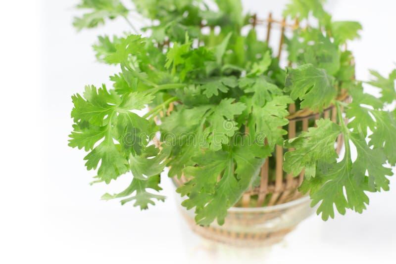 Πράσινα φύλλα κορίανδρου στο καλάθι στοκ εικόνες με δικαίωμα ελεύθερης χρήσης
