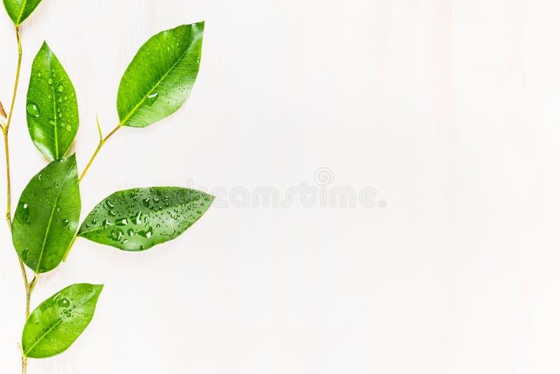 Πράσινα φύλλα με τις πτώσεις νερού στο άσπρο επιτραπέζιο υπόβαθρο, τοπ άποψη στοκ φωτογραφία με δικαίωμα ελεύθερης χρήσης