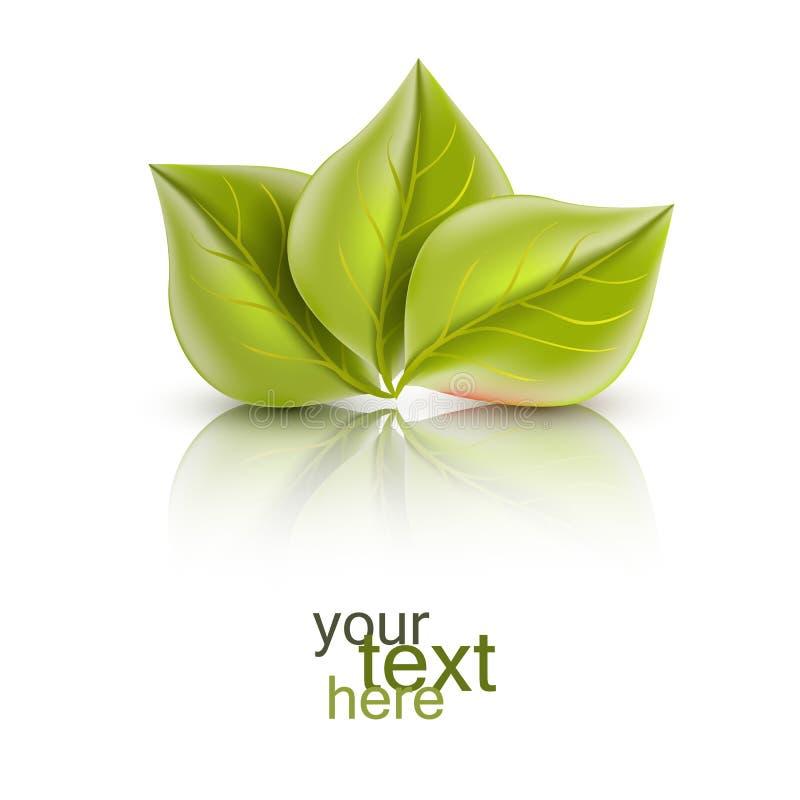 πράσινα φύλλα τρία διανυσματικά φύλλα με την αντανάκλαση διανυσματική απεικόνιση