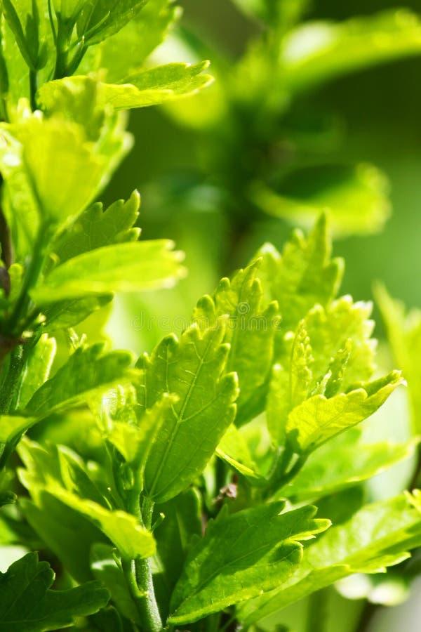 Πράσινα φύλλα των φυτών κήπων από το φράκτη στοκ εικόνα με δικαίωμα ελεύθερης χρήσης
