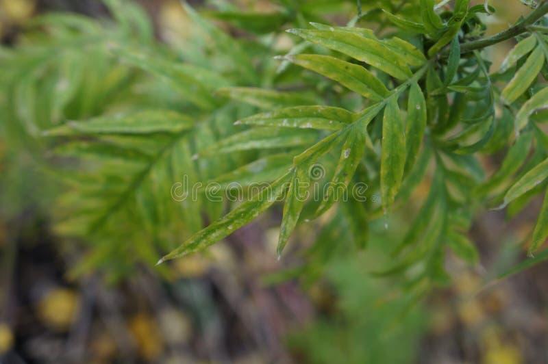 Πράσινα φύλλα φθινοπώρου στοκ εικόνα