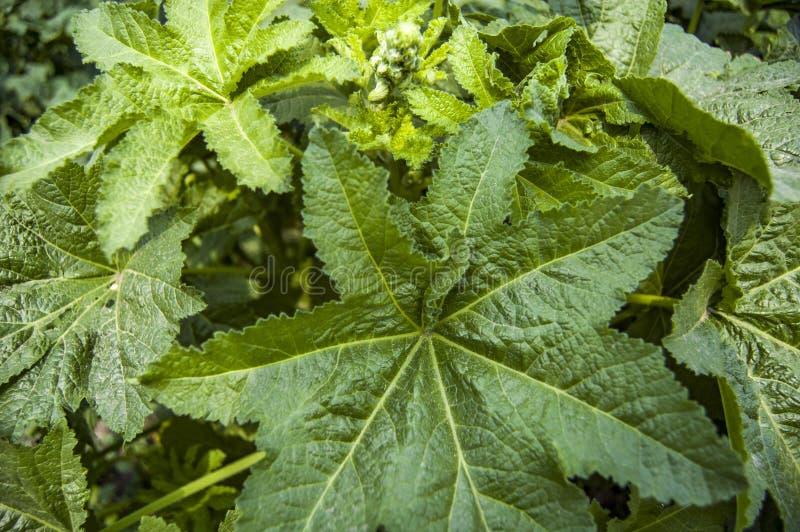 πράσινα φύλλα στοκ εικόνες