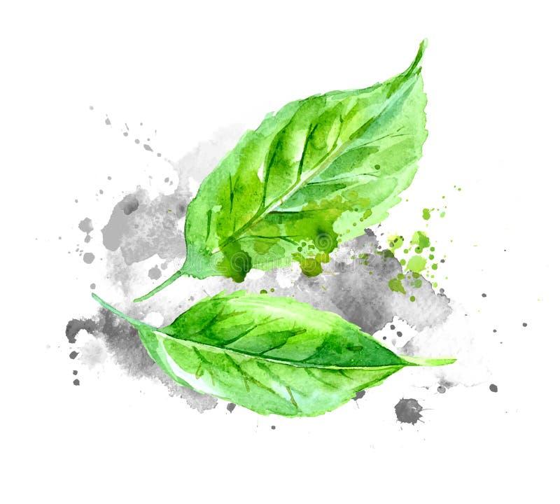 Πράσινα φύλλα watercolor με τους γκρίζους παφλασμούς χρωμάτων σε χαρτί ελεύθερη απεικόνιση δικαιώματος