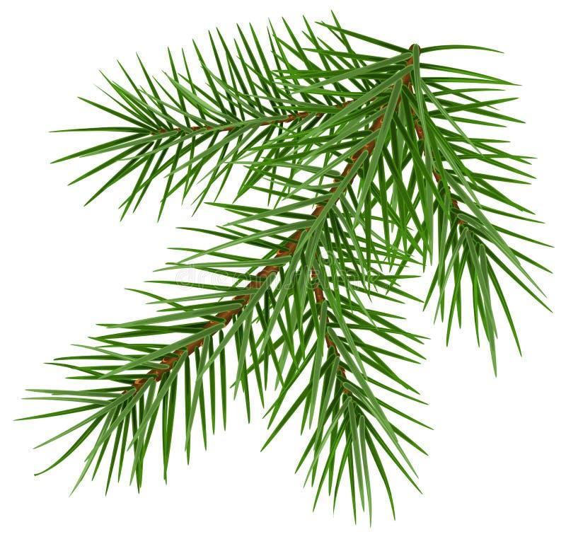 Πράσινα χνουδωτά κομψά Χριστούγεννα συμβόλων κλάδων βοηθητικά ελεύθερη απεικόνιση δικαιώματος