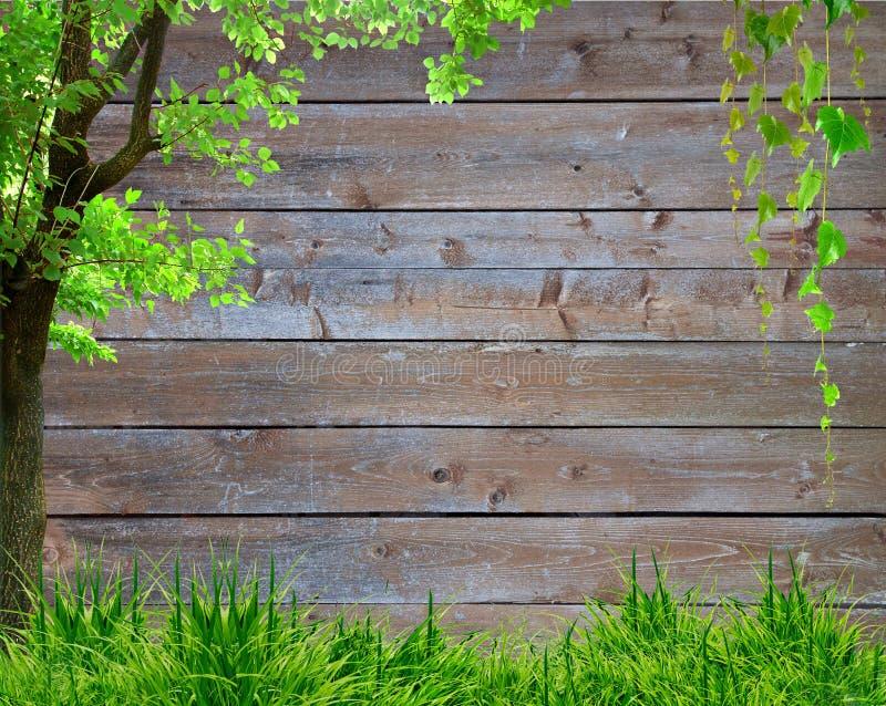 Πράσινα χλόη άνοιξη και φυτό φύλλων πέρα από το ξύλινο υπόβαθρο φρακτών στοκ εικόνα με δικαίωμα ελεύθερης χρήσης