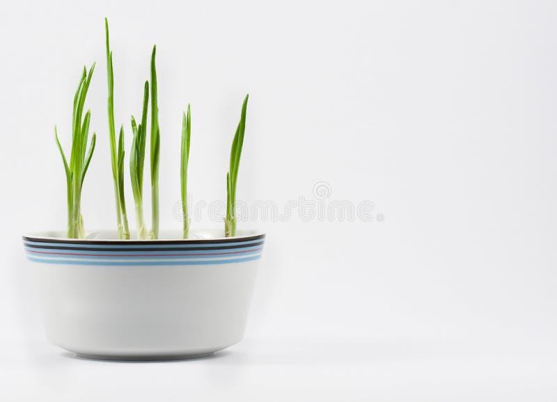 Download πράσινα 1 στοκ εικόνα. εικόνα από φυτό, βλαστοί, γεύμα - 13175019