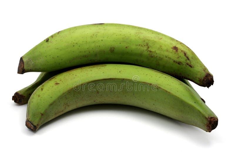 πράσινα plantains στοκ εικόνες