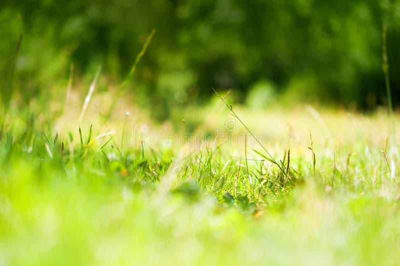 Πράσινες άγριες χλόες στοκ φωτογραφίες με δικαίωμα ελεύθερης χρήσης