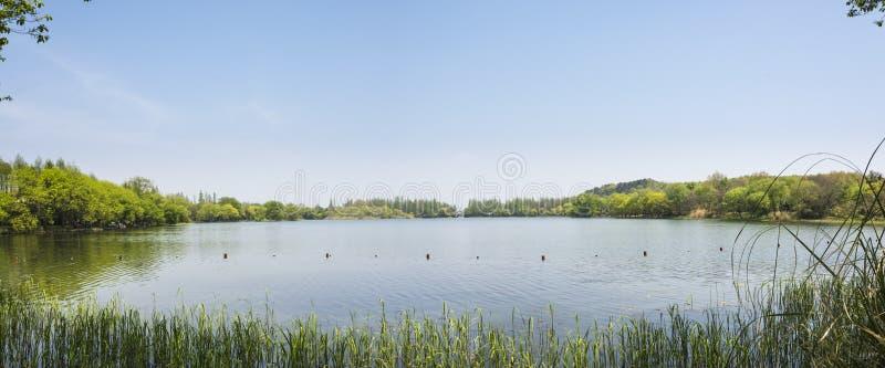 Πράσινες δέντρο ακτών και χλόη grees στοκ εικόνες με δικαίωμα ελεύθερης χρήσης