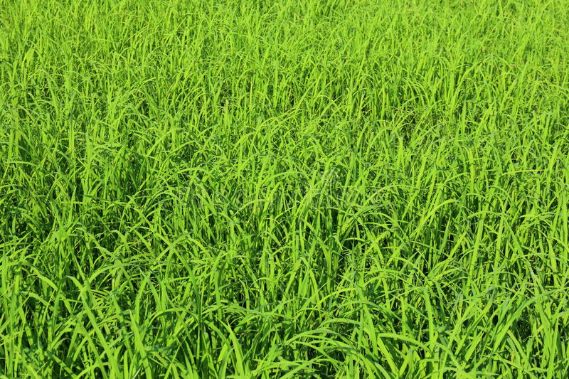 Πράσινες ανασκοπήσεις στοκ εικόνες