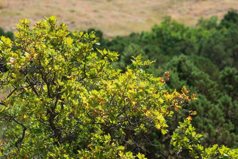 Πράσινες βαλανιδιές mountainside στοκ φωτογραφία με δικαίωμα ελεύθερης χρήσης