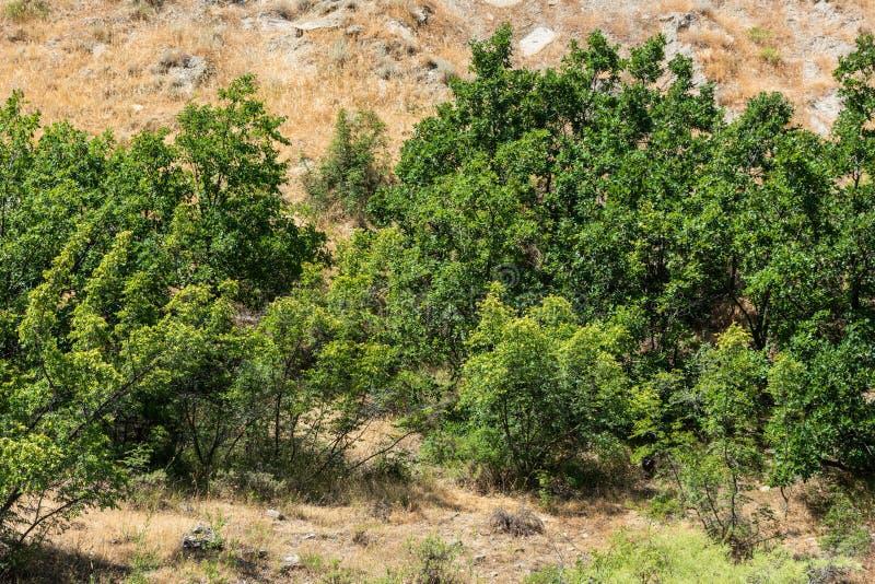 Πράσινες βαλανιδιές mountainside στοκ εικόνα με δικαίωμα ελεύθερης χρήσης