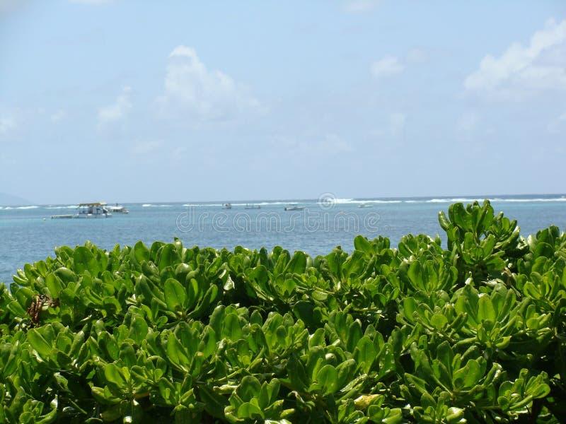Πράσινες εγκαταστάσεις στην παραλία στοκ εικόνα με δικαίωμα ελεύθερης χρήσης