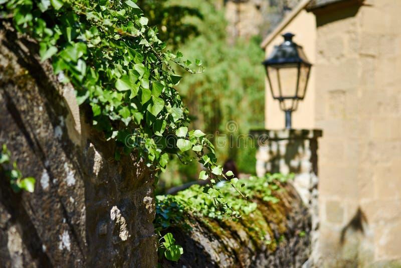 Πράσινες εγκαταστάσεις στον παλαιό τοίχο πόλεων στοκ φωτογραφία με δικαίωμα ελεύθερης χρήσης