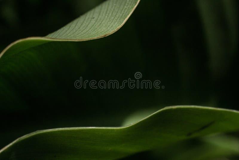 Πράσινες Καλές Τέχνες στοκ φωτογραφίες