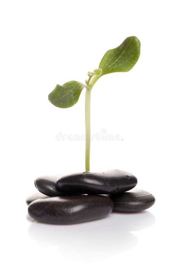 πράσινες μικρές πέτρες νεα στοκ φωτογραφίες με δικαίωμα ελεύθερης χρήσης