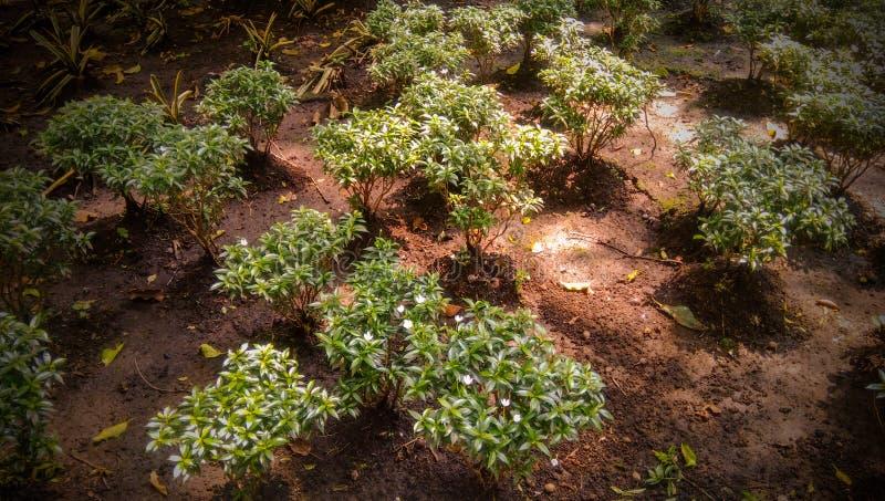 Πράσινες συγκομιδές στοκ εικόνες
